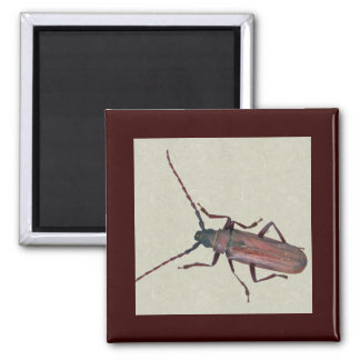 Longhorn Beetle Coordinating Items Magnets