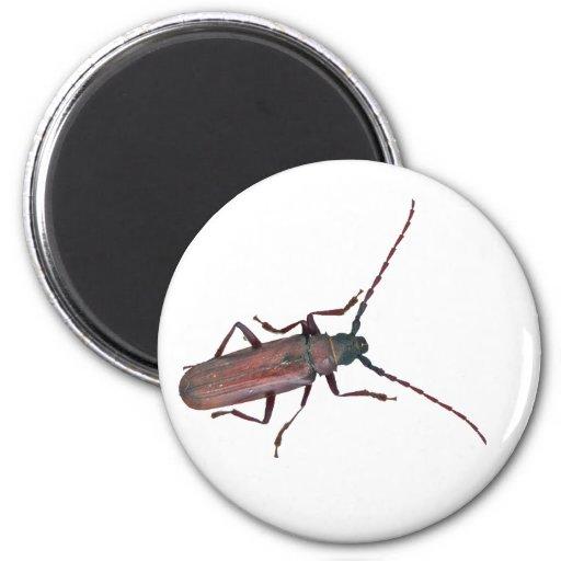 Longhorn Beetle Coordinating Items Refrigerator Magnets