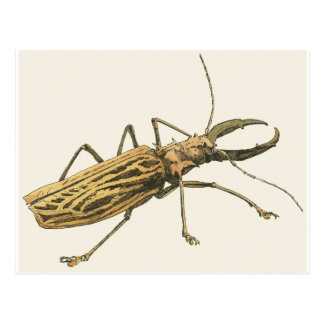 Longhorn Beetle Postcard
