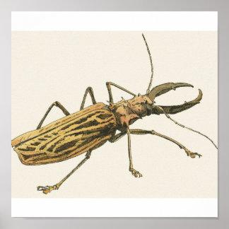 Longhorn Beetle Poster