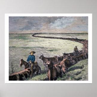 Longhorn cattle drive from Texas to Abilene, Kansa Poster