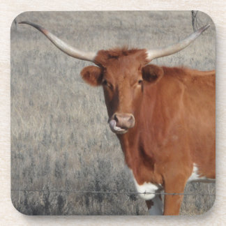 Longhorn Cow Licking Her Nose Coasters