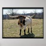 Longhorn Steer {2} -choose size & canvas Poster