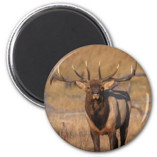Look at Me! 6 Cm Round Magnet