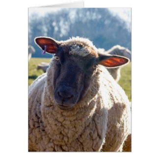 """Look Into My Eyes"" Sheep Greetings Card"