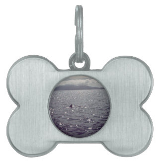 look out.jpg pet ID tag