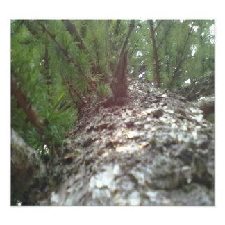 Look up the Tree Photo Print
