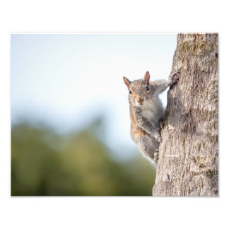 Looking at You! Squirrel Photo Prints