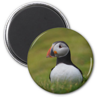 Looking for the Burrow Puffin Magnet