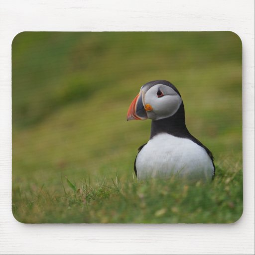 Looking for the Burrow Puffin Mousepads