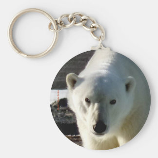 Looking into the eye of a Polar bear Basic Round Button Key Ring