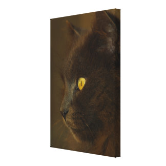 Looking Out Gallery Wrap Canvas