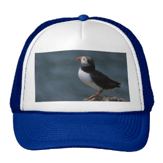 Looking Out to Sea Puffin Hat