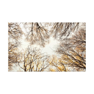 Looking straight up through trees canvas print