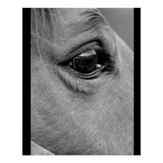 Looking The Horse In the Eyes Poster