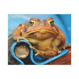 Looking Toadly Awesome In Blue Toad Canvas Print