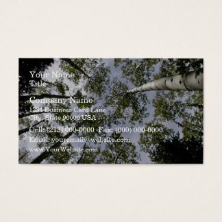 Looking Up at Aspen Trees in forest Business Card
