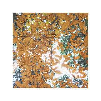 Looking up at Autumn Leaves Canvas Print