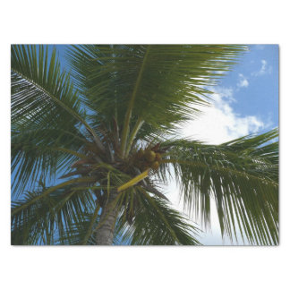 Looking Up to Coconut Palm Tree Tropical Nature Tissue Paper