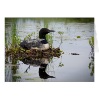 Loon on nest. greeting card