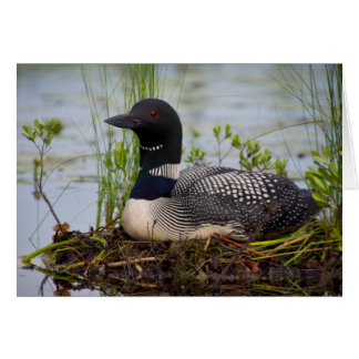 Loon on Nest Note Card