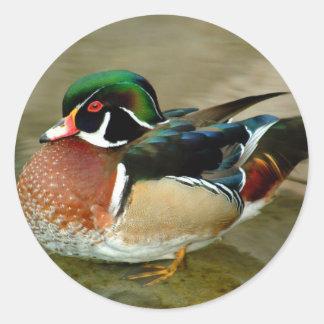 Loon Round Sticker