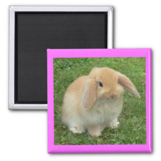 Lop Bunny Square Magnet