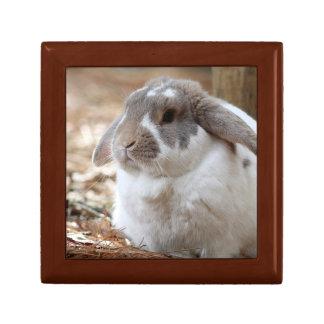 Lop-eared bunny gift box