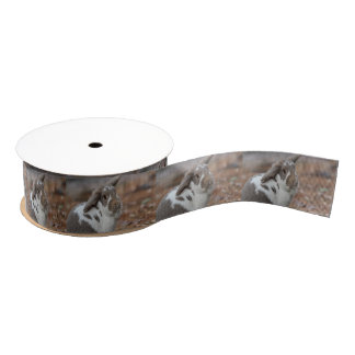 Lop-eared bunny grosgrain ribbon