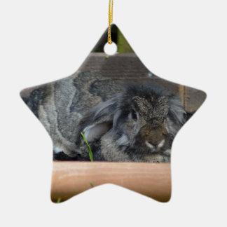Lop eared rabbit ceramic star decoration