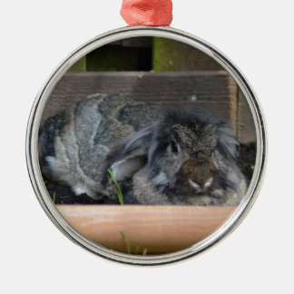 Lop eared rabbit christmas ornament
