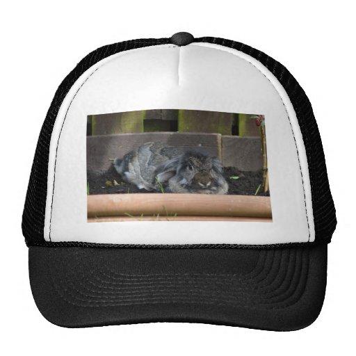 Lop eared rabbit hats
