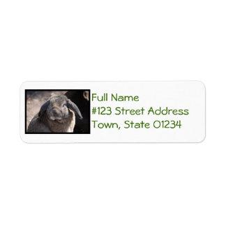 Lop Eared Rabbit Return Address Label