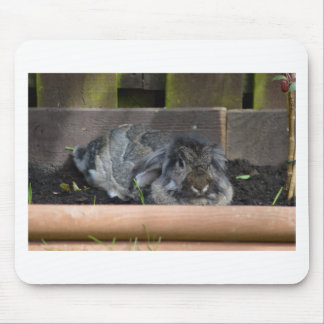 Lop eared rabbit mousepads