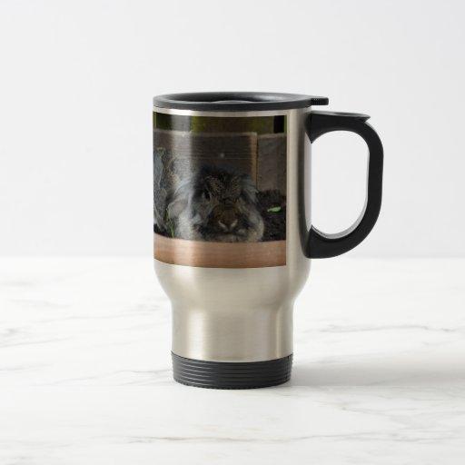 Lop eared rabbit coffee mugs