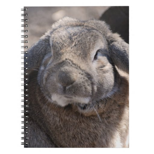 Lop Eared Rabbit Note Book