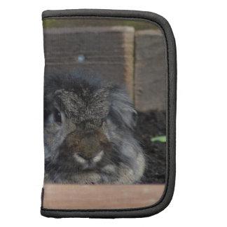 Lop eared rabbit organizer