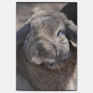 Lop Eared Rabbit Post-it® Notes