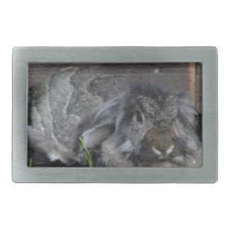 Lop eared rabbit rectangular belt buckles