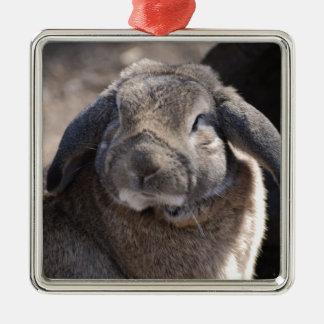 Lop Eared Rabbit Silver-Colored Square Decoration