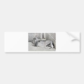 Lop  eared rabbit sleeping bumper sticker