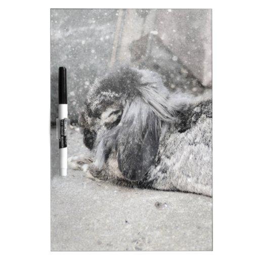 Lop  eared rabbit sleeping dry erase board