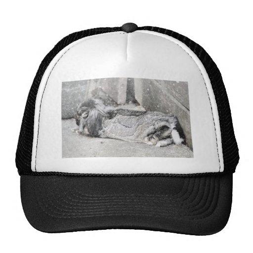 Lop  eared rabbit sleeping trucker hat