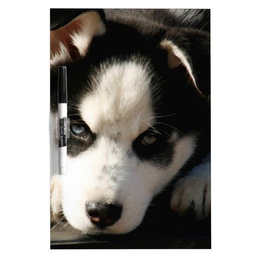 Lop Eared Siberian Husky Sled Dog Puppy 2 Dry Erase Whiteboards