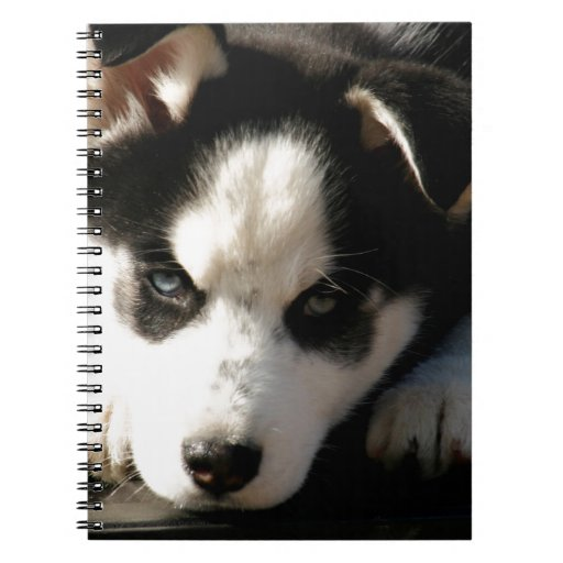Lop Eared Siberian Husky Sled Dog Puppy 2 Spiral Notebook