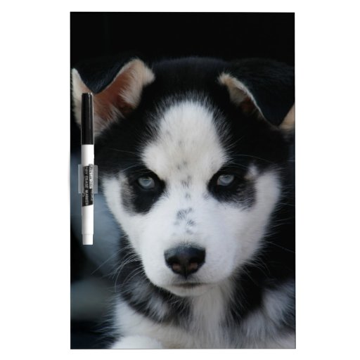 Lop Eared Siberian Husky Sled Dog Puppy Dry Erase Board