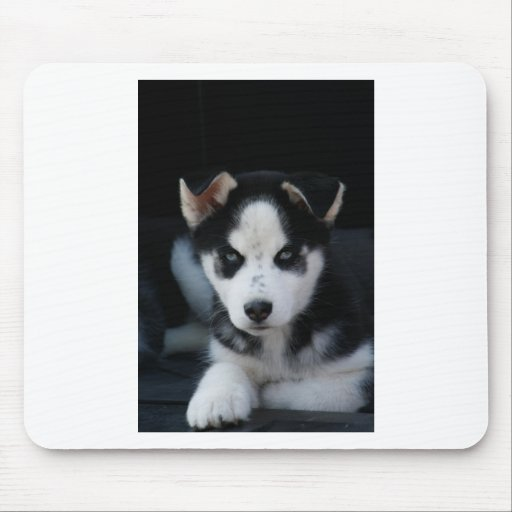 Lop Eared Siberian Husky Sled Dog Puppy Mouse Pads