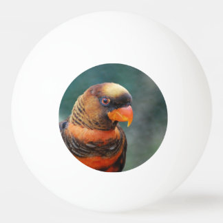lorikeet-10 jpg Ping-Pong ball