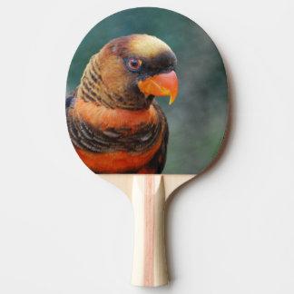 lorikeet-10 jpg ping pong paddle