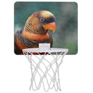 lorikeet-10 jpg mini basketball backboards